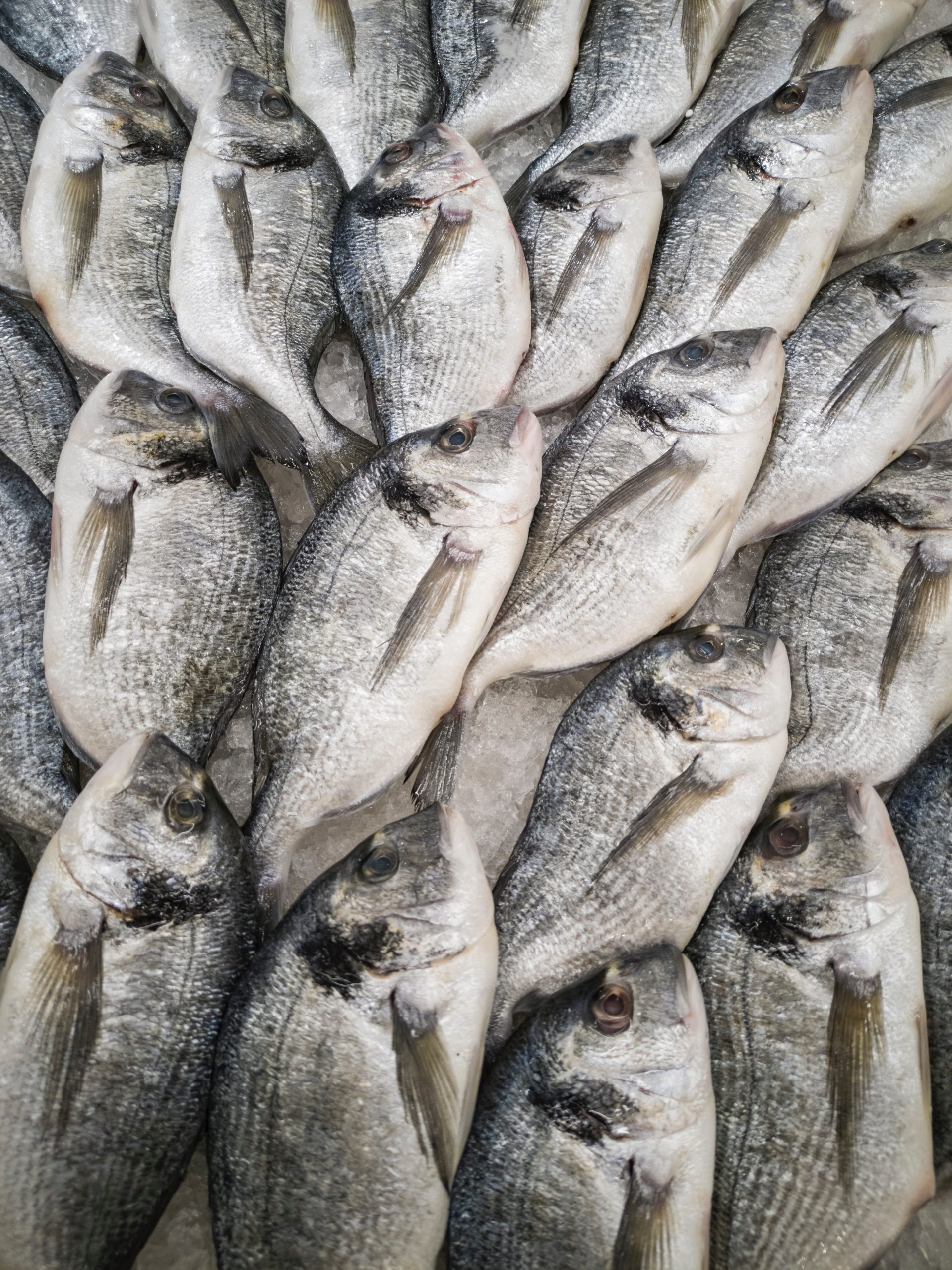 Fish and Seafood consumption to grow 13.69% in 2029