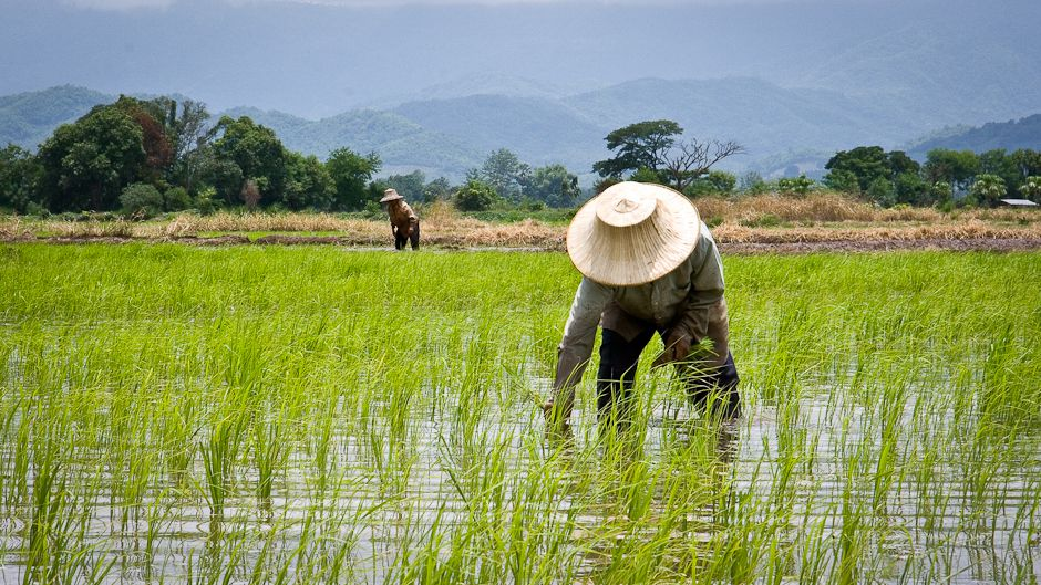 Rice production and consumption in Nigeria to grow by 2.22% and 3.52% respectively in 2029