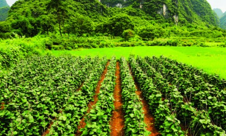 Nigeria's Agricultural land use to grow by 5% in 2021