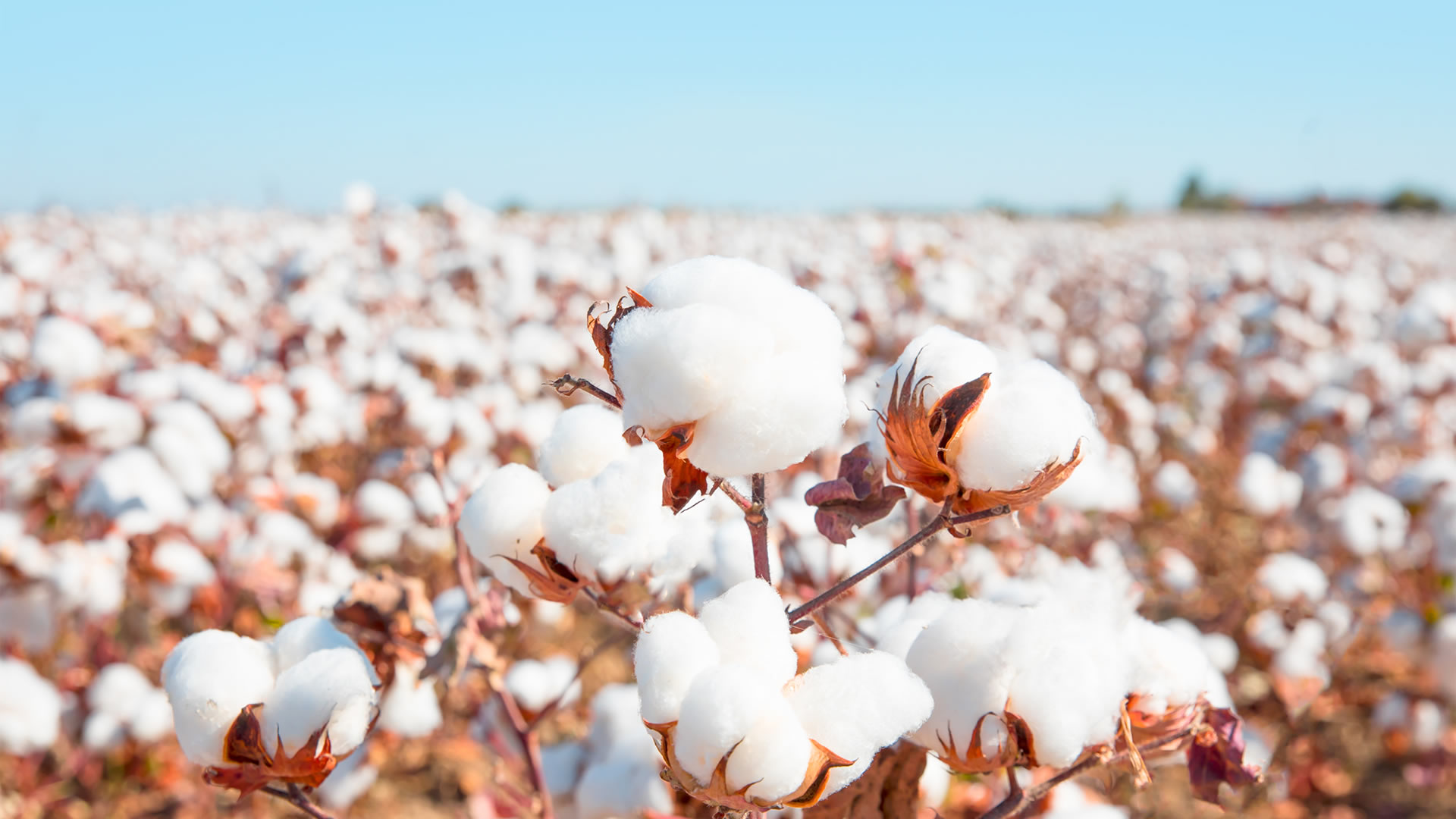 Nigeria's Cotton Production to Account for 20.29% of Africa's production by 2029