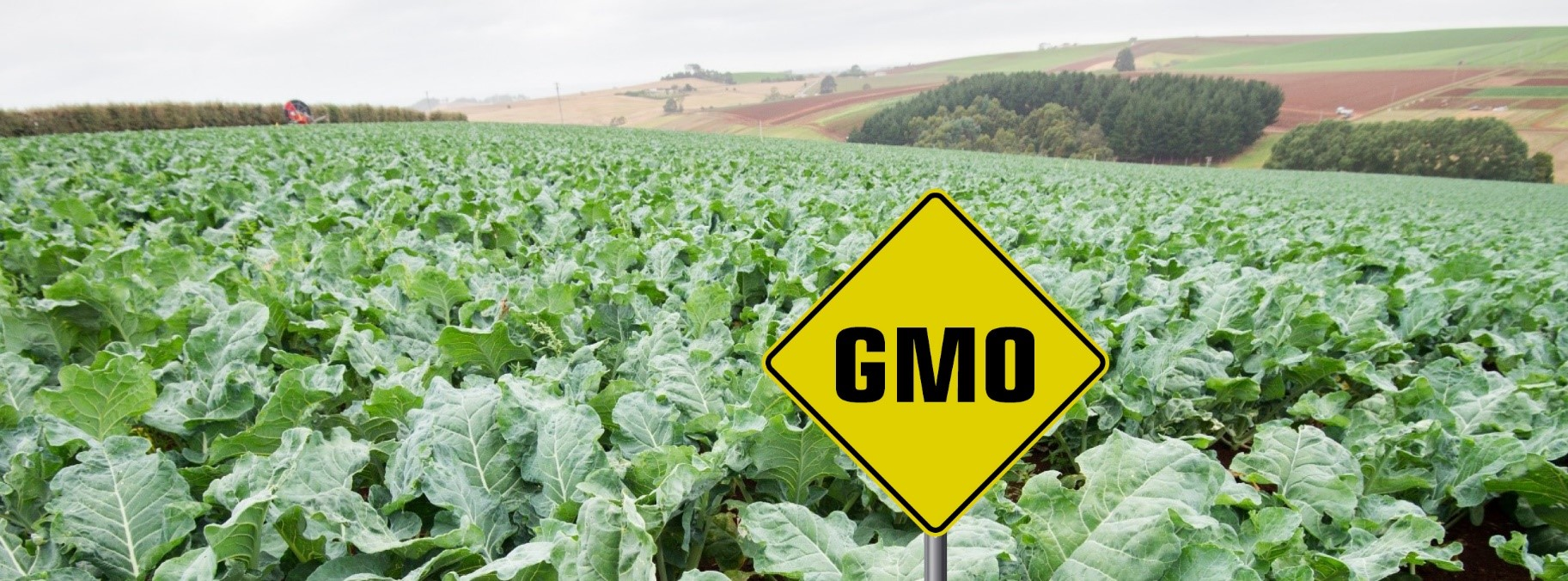 Kano Farmers Call For Ban on GMO Crops