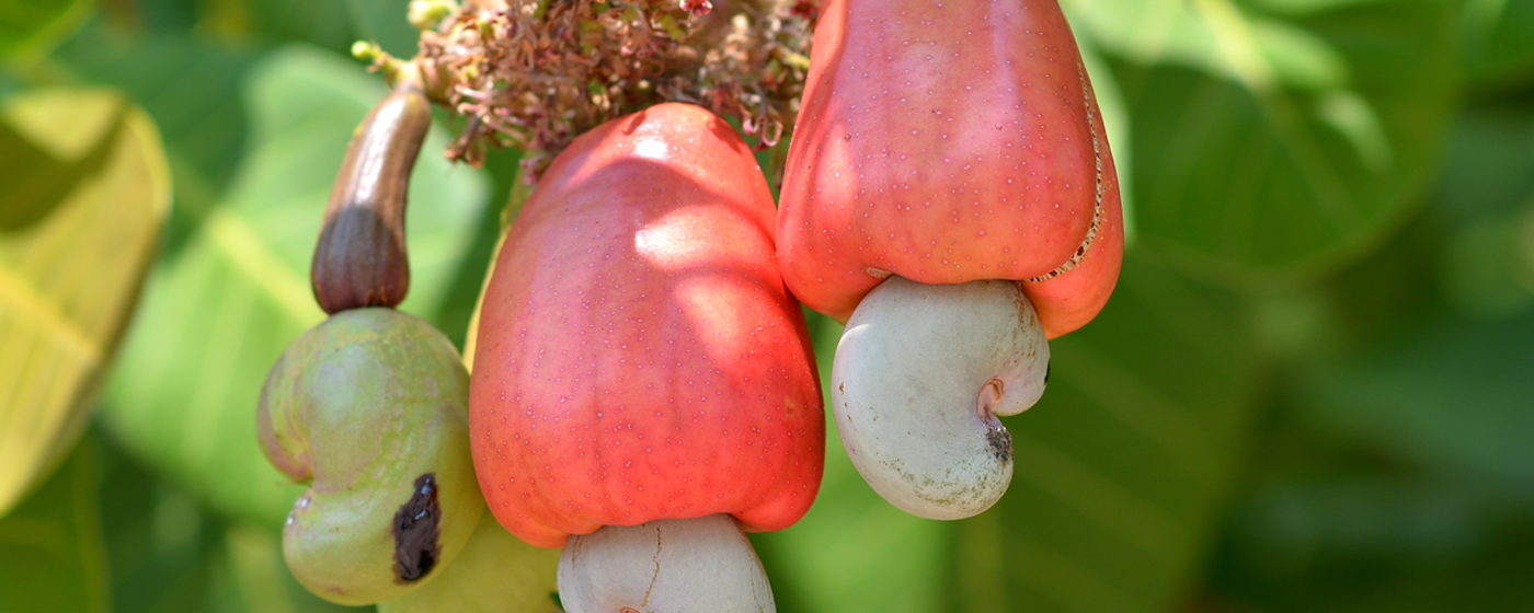 Cashew nuts valued at N5.26 billion exported in Q4, 2020